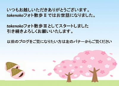 ブログ移行3.jpg